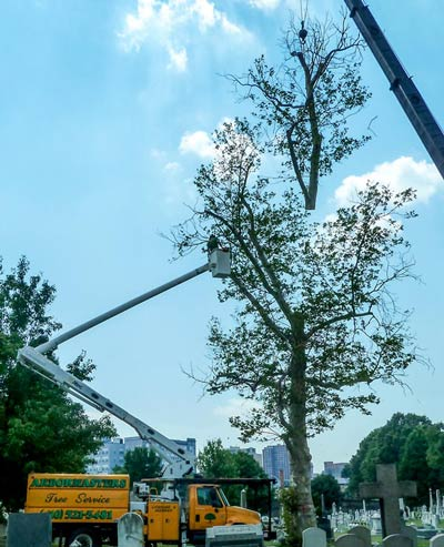 Removing a tree with a crane and bucket truck.